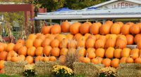 Nelson's pumpkin patch is taking place on Wednesday, October 26, 2016.  Please bring a plastic bag for this event and dress warmly for the weather.